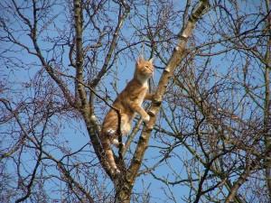cat-650420_1280